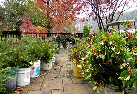 AG-Greenery-Sale-Patio
